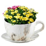 Tea Cup Planter & Saucer Calacatta 10in (25.4cm)